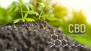 A detailed guide about the use of CBD products